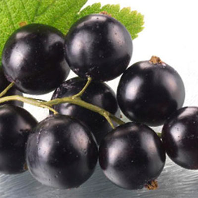 急凍莓果-黑醋栗(400g/包)