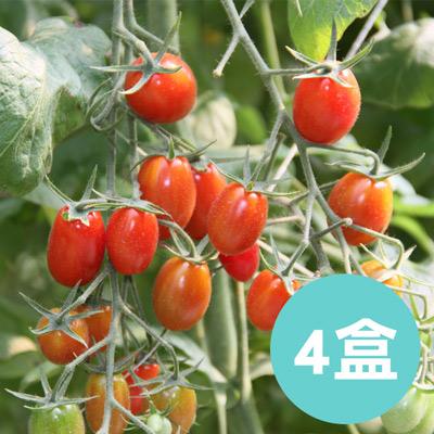 南投埔里【薄皮‧玉女小番茄】(1斤*4盒)