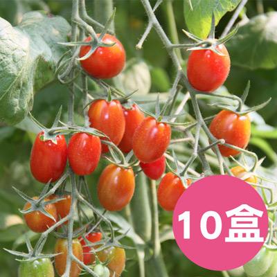 南投埔里【薄皮‧玉女小番茄】(1斤*10盒)