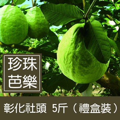 彰化社頭珍珠芭樂(5斤/盒)