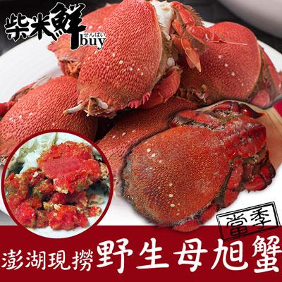 柴米鮮BUY澎湖現撈野生母旭蟹(490g±10%/隻)