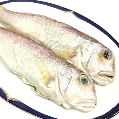 鮮之流巨無霸金面馬頭魚(650g±50g/尾)
