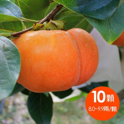 一籃子台中梨山在欉紅甜柿8A (10顆/箱)