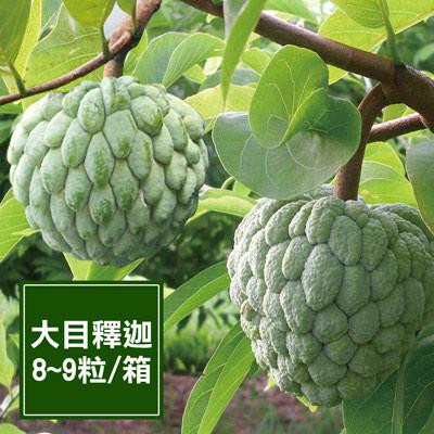 一籃子台東太麻里大目釋迦禮盒(大菓)(8~9粒/箱)