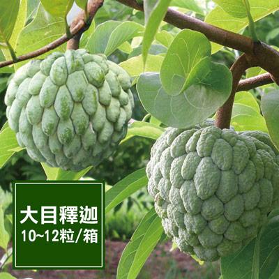 一籃子台東太麻里大目釋迦禮盒(中菓)(10~12粒/箱)