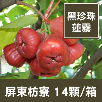 一籃子屏東枋寮黑珍珠蓮霧(14顆/箱)