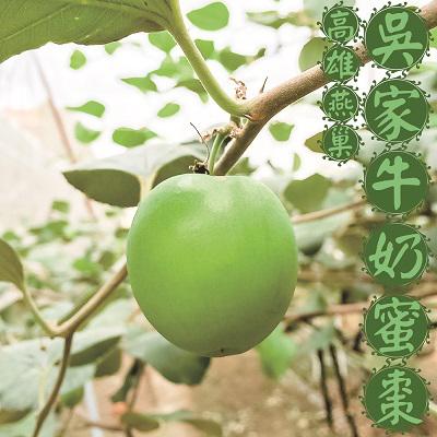 ㊣高雄燕巢吳家特級牛奶蜜棗3台斤(13~16顆/箱)