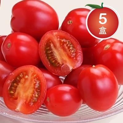 苗栗頂級溫室蜜聖女蕃茄*5盒