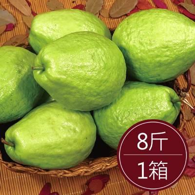 彰化溪州珍珠芭樂(8斤)