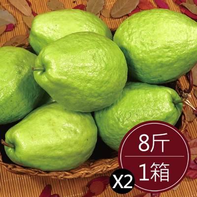 彰化溪州珍珠芭樂(8斤)*2箱
