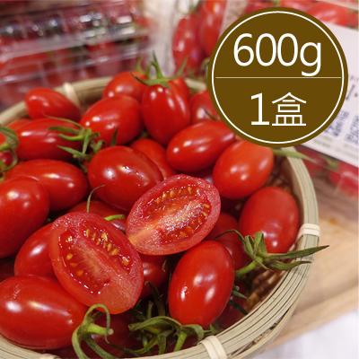 溫室栽種玉女小蕃茄1盒