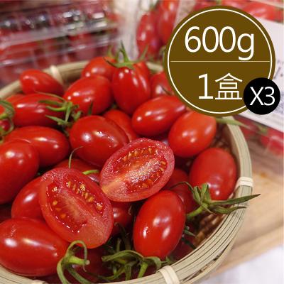 溫室栽種玉女小蕃茄3盒