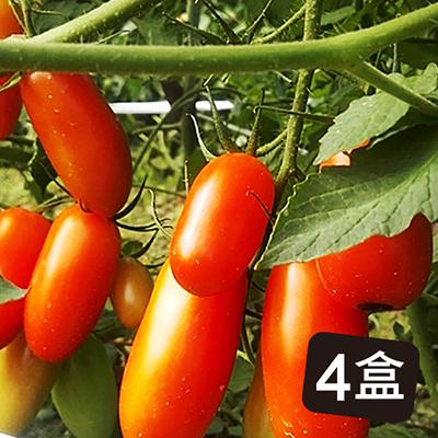 爆甜多汁的溫室玉女小蕃茄(4盒)