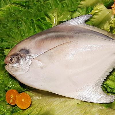 印度洋特選白鯧魚(450g±10%/包)