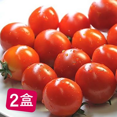 極品鮮甜鹽地帥哥番茄(600g)*2盒