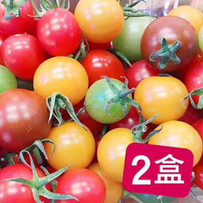 溫室五行開運蕃茄2盒