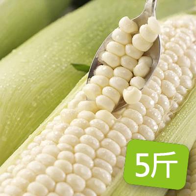 台灣白龍王水果玉米5斤