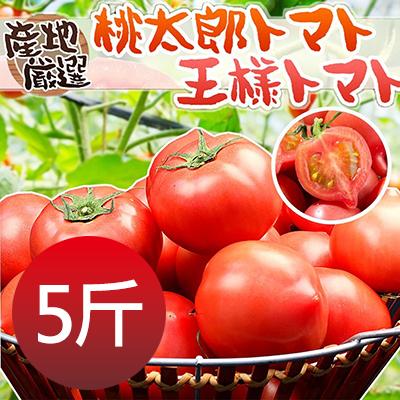 日本品種桃太郎蕃茄5斤