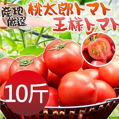 日本品種桃太郎蕃茄10斤