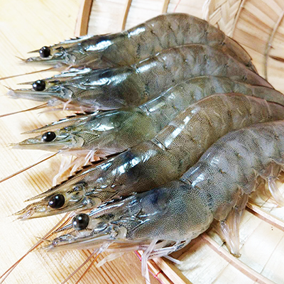 漁家樂無毒白蝦(600g±5%/包)