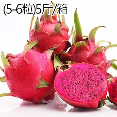 台灣高山紅肉火龍果(5-6粒)5斤/箱