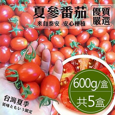 苗栗頂級蜜3小蕃茄5盒