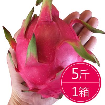 夏日美顏必吃火龍果(5斤)*1箱
