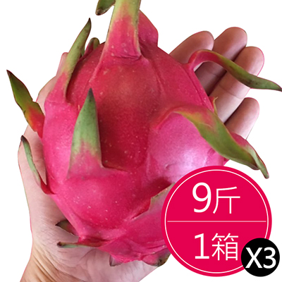 夏日美顏必吃火龍果(9斤)*3箱