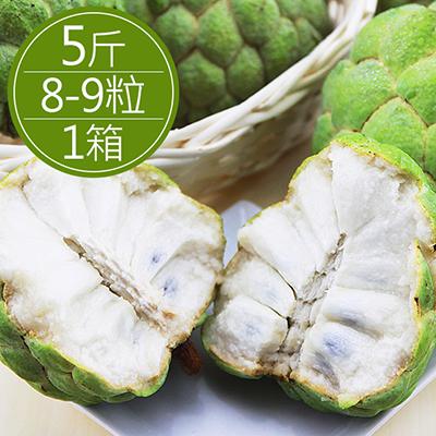台東大目釋迦(8-9粒/5斤)