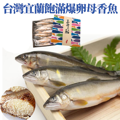 宜蘭XXL飽滿抱卵母香魚(1000g±5%/包)