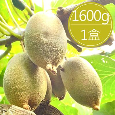 台灣黃金奇異果(1600g±5%/盒)