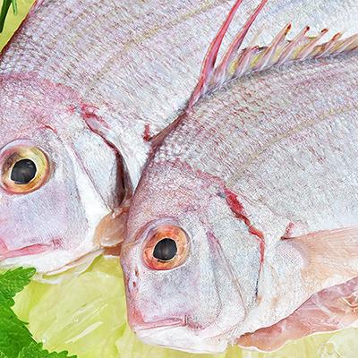 澎湖野生赤宗魚(2隻-200~250g/包)
