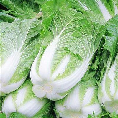 山東大白菜(1500公克±10%)