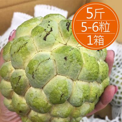產地直送-台東大目釋迦(5斤/箱)