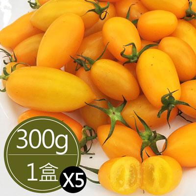 溫室黃金玉女蜜香小蕃茄(300g*5盒)
