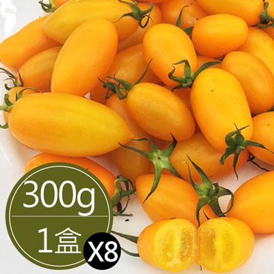 溫室黃金玉女蜜香小番茄(300g*8盒)