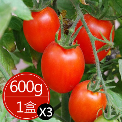 苗栗溫室聖女蜜蕃茄(600g*3盒)