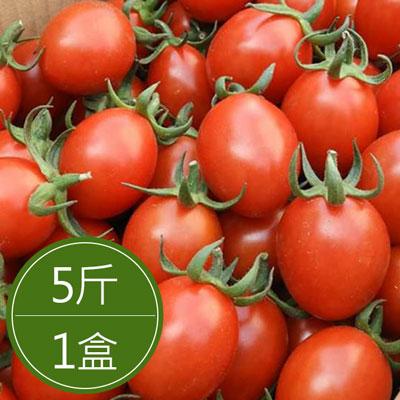 鹽地番茄 (5斤/盒)