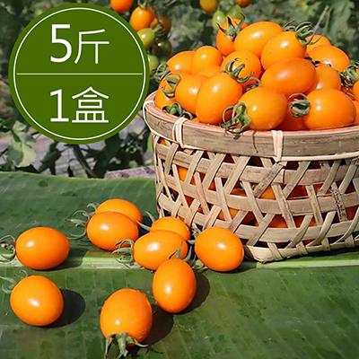 美濃錦珠番茄(5斤裝/盒)