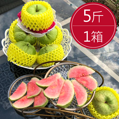 高雄大樹紅心芭樂(5斤/箱)