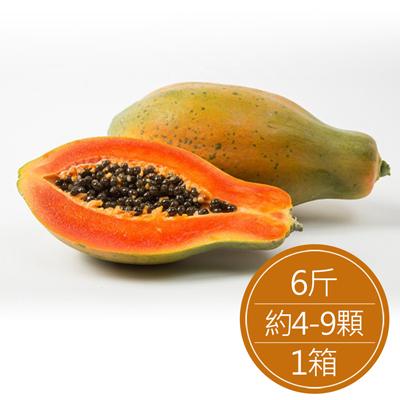高雄田寮 日陞網室木瓜(6斤/約4-9顆/箱)