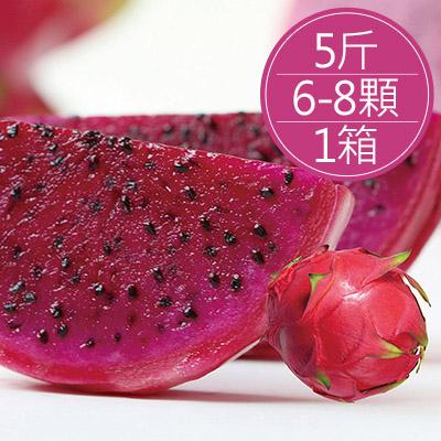 高山紅肉火龍果(6-8顆/5斤/箱)