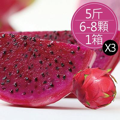 高山紅肉火龍果(5-8顆/5斤/箱,共2箱)