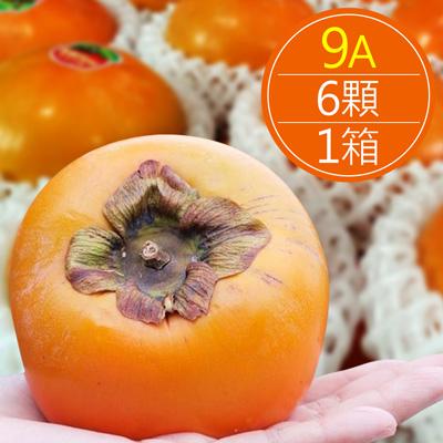台中摩天嶺 在欉紅甜柿(9A/6顆/箱)